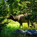 Up close with the neighbors.- 36 hours in Bozeman, Montana