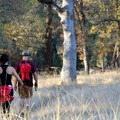 Point Defiance Trail in South Yuba River State Park.- Favorite Fall Hikes