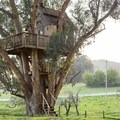 Treehouse at Swallowtail Studio. Photo by Madison Kotack.- 8 Romantic Treehouses to Stay in this Valentine's Day