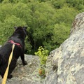 Be cautious with pets near the drop.- Exploring Chimney Mountain in the Adirondacks