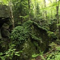 The lush forest comes to life in the spring and summer.- Exploring Chimney Mountain in the Adirondacks