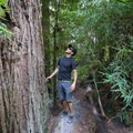 Encountering the giant redwood trees on the Skyline to the Sea Loop Trail.- Destination Santa Cruz: Your Gateway to the Outdoors
