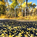 Even roads become beautiful in the fall. Weber Canyon.- How to Photograph Autumn Colors