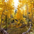 Fall colors in South Lake Tahoe.- 5 Incredible Fall Hikes Near South Lake Tahoe