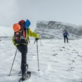 The Expeditions are ideal snowshoe poles. They are stout, they have good powder baskets, and they pack down to a very small size. - Gear Review: Black Diamond Expedition 3 Ski Poles