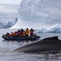 Polar region cruises make it possible to observe whales and other marine mammals in spectacular remote settings.- Introducing Happywhale - Where Citizen Science and Ecotourism Meet