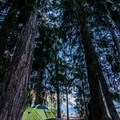 Tent set up in the Trinity Alps.- Backpacking Essentials For Beginners