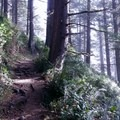 The shady, forested Saint Perpetua Trail.- Wednesday's Word - Yachats