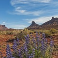 Springtime in the desert near the town of Moab, Utah.- Going with the Flow: Seasonal Travel Tips