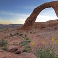 Wildflowers below Corona Arch. - Going with the Flow: Seasonal Travel Tips