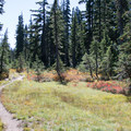 Fall color in a meadow along Thomas Lake Trail.- Fall Color in Indian Heaven Wilderness, WA