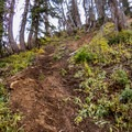 Cutting swtichbacks can lead to serious erosion problems.- Minimize Your Impact with Leave No Trace
