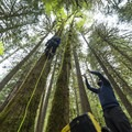 """Up"" means there's more to explore.- Growing Up Inside A Douglas Fir"