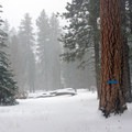 Large ponderosa pines of Tronsen Meadow.- Living deep and out of bounds on Washington's Blewett Pass