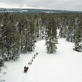 Dog sledding is a thrilling winter activity in West Yellowstone. Photo courtesy of West Yellowstone.- 3-Day Winter Adventure Itinerary for West Yellowstone