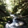 Trapper Creek Wilderness.- National Wilderness Preservation System