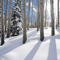 Look for shadows and contrast to avoid stale scenes. - Essential Tips for Great Winter Photography