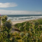 Moolack Beach, Northern Oregon Coast, Outdoor Project
